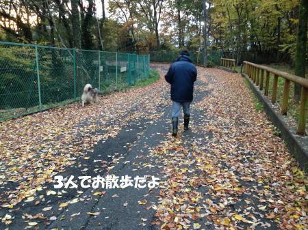 2016-11_23_6.jpg