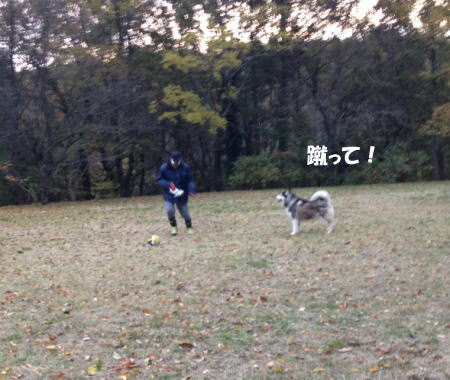 2016-11_23_7.jpg
