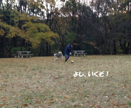 2016-11_23_8.jpg