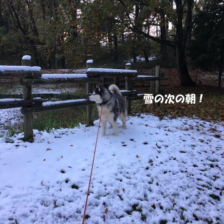 2016-11_25_1.jpg