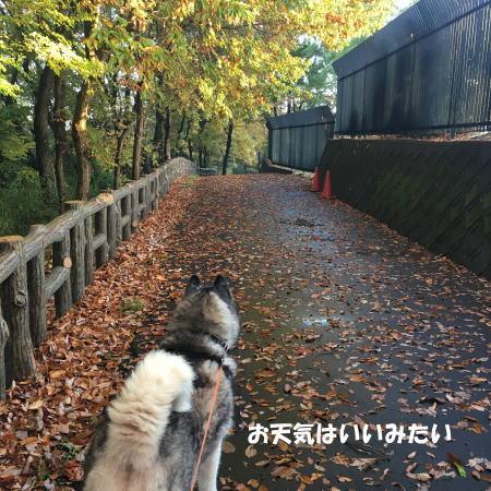 2016-11_25_2.jpg