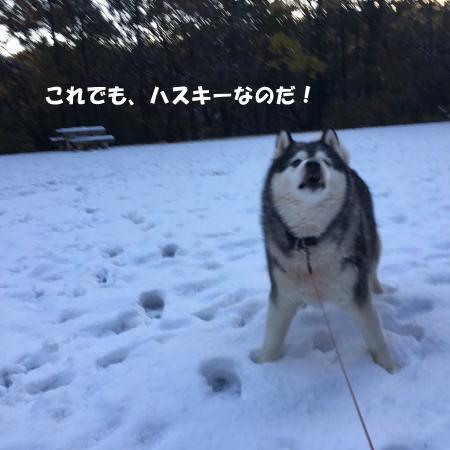 2016-11_25_8.jpg