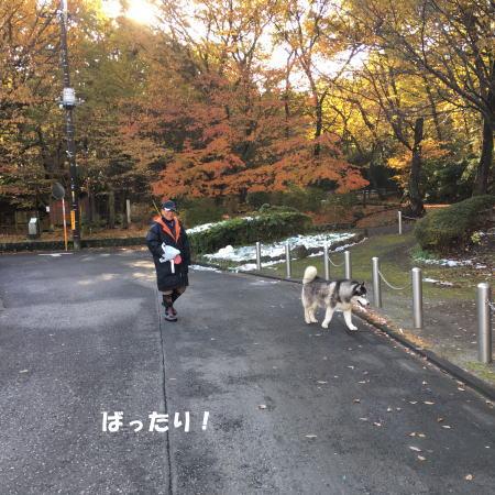 2016-11_28_10.jpg