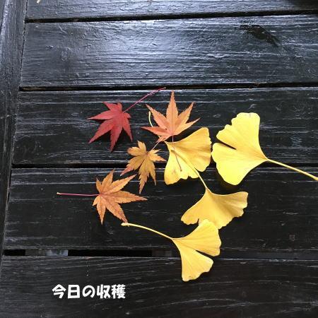 2016-11_28_11.jpg