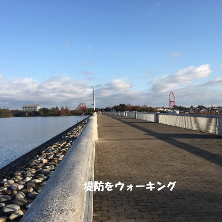 2016-11_28_6.jpg
