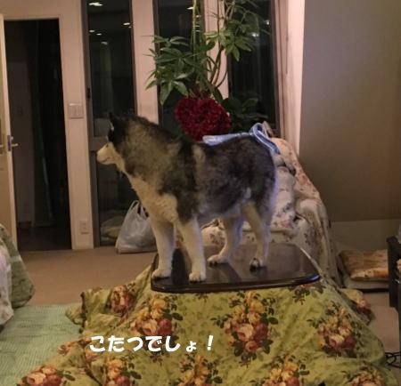 2016-11_29_3.jpg