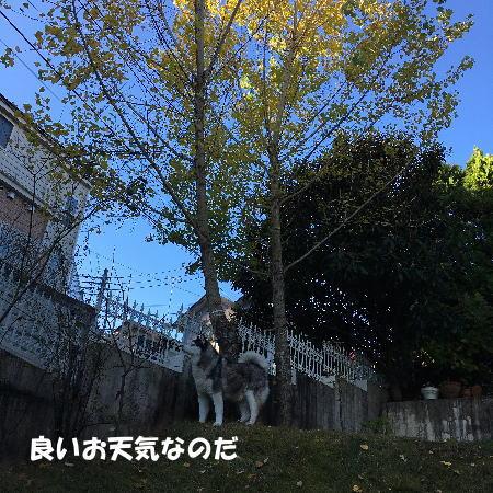 2016-12_02_3.jpg