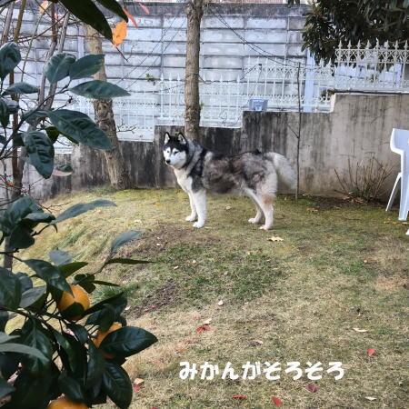 2016-12_20_1.jpg