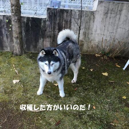 2016-12_20_2.jpg