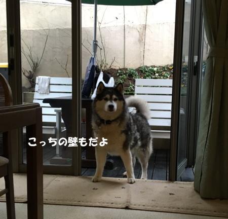 2016-12_27_5.jpg