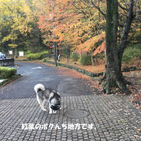 2016-11_28_1 - コピー