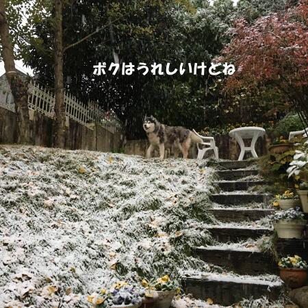 2016_1124_4.jpg