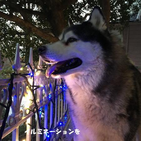2016_1204_5.jpg