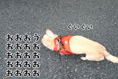 DSC_000014(2)-2.jpg