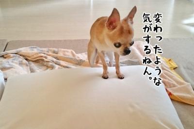 DSC_1404-3.jpg