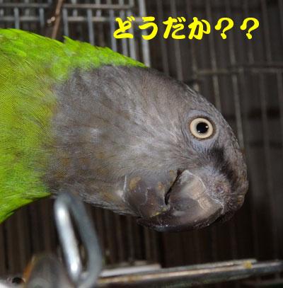 3_どうだか