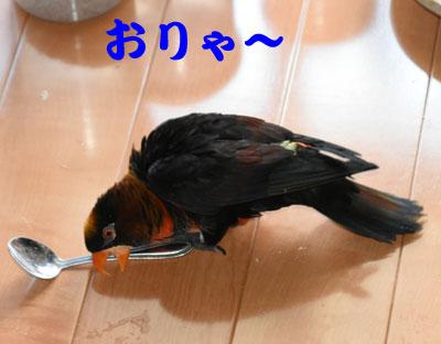 4_暴れる1