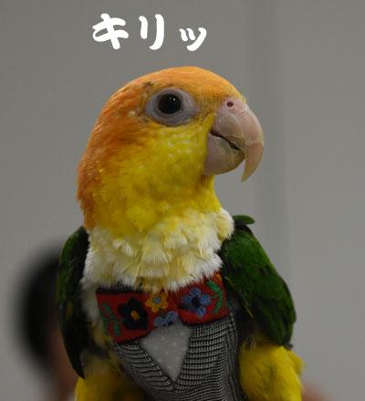 9_シロハラ