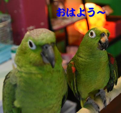 5_きーぼう