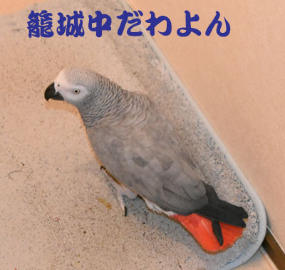 7_籠城中
