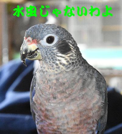 1_ビオ水虫