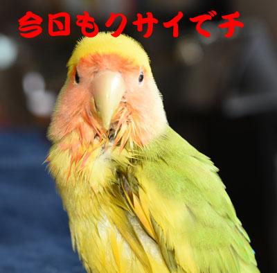 3_クサイ