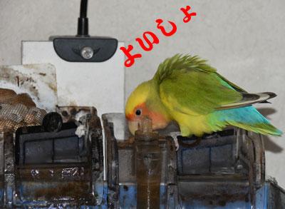 2_水槽2
