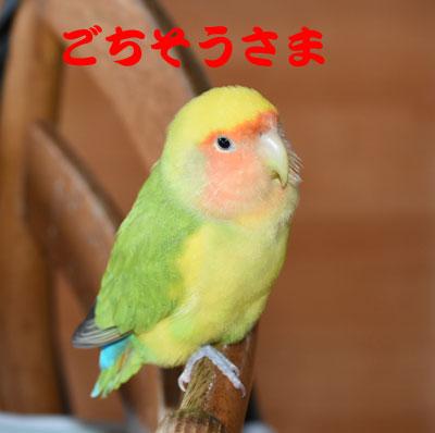 5_ごちそうさま