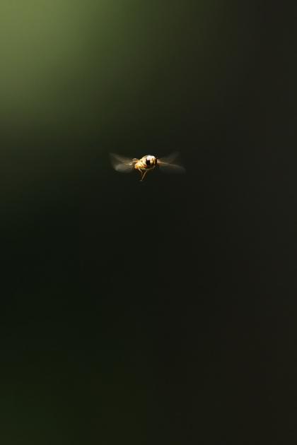 虫160521-1