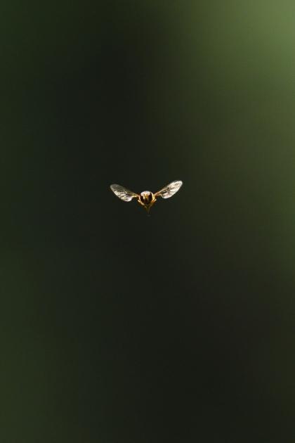 虫160521-2