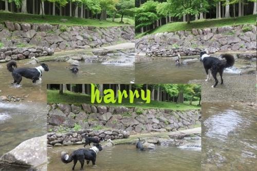 お山の裾野 で川遊び