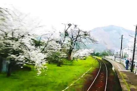 2016.04 樽見鉄道と桜 4
