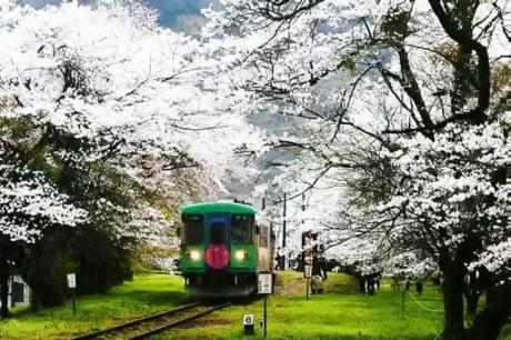 2016.04 樽見鉄道と桜 12