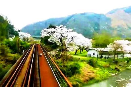 2016.04 樽見鉄道と桜 10