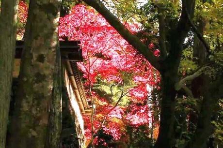 揖斐川町谷汲 横蔵 両界山横蔵寺の紅葉 -4