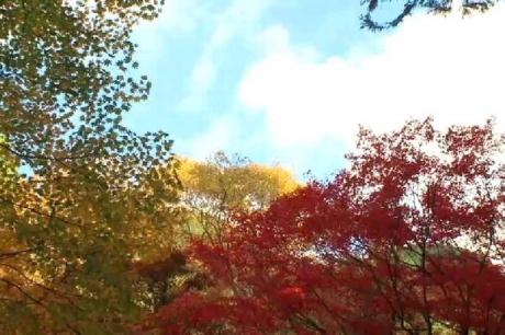 揖斐川町谷汲 横蔵 両界山横蔵寺の紅葉 -23