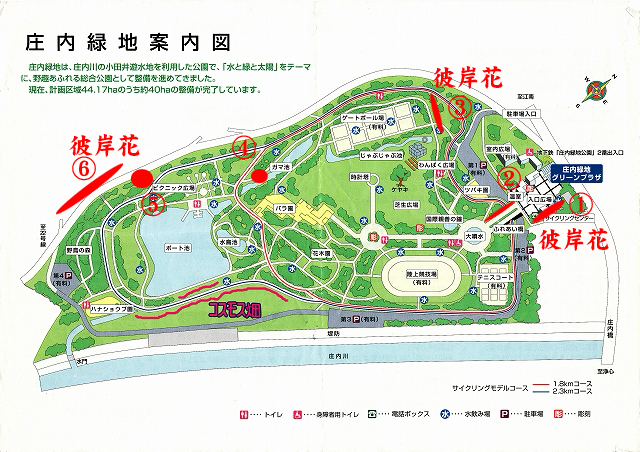 庄内緑地公園彼岸花・コスモス畑