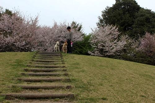 IMG_3907桜