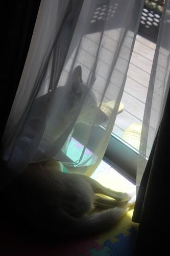 IMG_4549窓