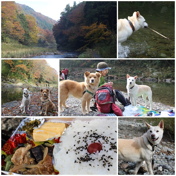嵐山2016