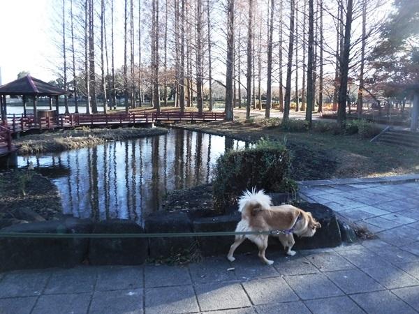 009総合公園