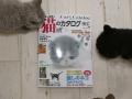2017猫カタログ