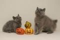 selkirk_161029_Halloween1