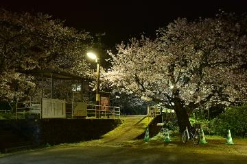 駅・桜情景2016(1)