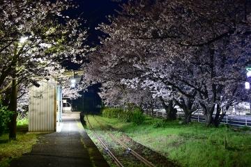 駅・桜情景2016(2)