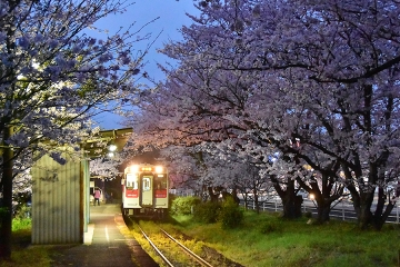 駅・桜情景2016(3)