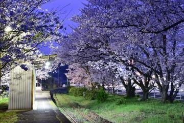 駅・桜情景2016(4)