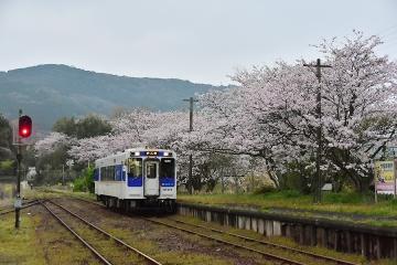 駅・桜情景2016(6)