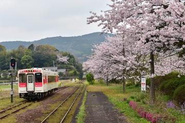 駅・桜情景2016(7)