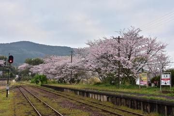 駅・桜情景2016(9)